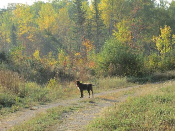 trail2014.jpg.w560h420.jpg
